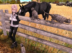 New Post! (hump muffin) Tags: horse cat zoom outdoor ns farm events runaway friday ane themill lazybones fashionblogging thesugargarden collabor88 elephanteposes thechapterfour nscutiestore veechi