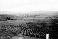 119A-BW-FrenchVinyard&Valley-1944 (ArgyleMJH) Tags: worldwarii 1944 france usarmy thirdarmy 119thaaagunbn antiaircraftartillery frenchcountryside francais 2emeguerremondiale vineyard vignoble worldwar2 secondeguerremondiale wwii ww2 epernay