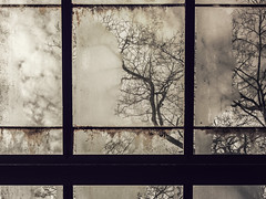 """there is nothing so stable as change"" (jojoannabanana) Tags: trees glass silhouette fog mood shadows quote branches gritty bobdylan melancholy mentalhealth canonpowershot psychological s100 3662016"