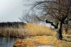 Aspettando la primavera ... (lefotodiannae) Tags: lago nikon d di 3200 inverno varese lefotodiannae