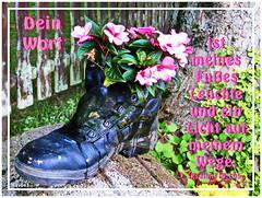 Leuchte meinem Fuss / lamp to my feet (Martin Volpert) Tags: light flower feet lamp fleur licht jesus flor pflanze bible blomma christianity blume fiore blüte bibel blomster virág fuss christus schuh lore biblia bloem leuchte blóm çiçek floro kwiat flos ciuri bijbel kvet kukka cvijet flouer glauben christentum bláth cvet zieds õis floare תנך blome žiedas bibelverskarte siefel mavo43