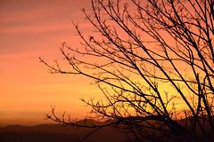 (Irene Drusiani) Tags: from morning trees windows light copyright house colour nature colors beauty sunrise early alba like highlights hills monday naturalbeauty comment mattino followme greatlight goodcolors beautyness