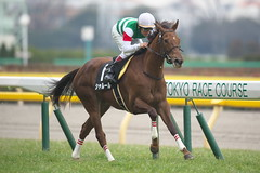 Chaleur (arumckF) Tags: tokyo  horserace chaleur    zennorobroy norihiroyokoyama   greatfever mikiomatsunaga