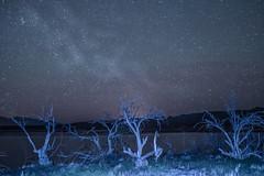 Trees Under the Stars (Carl Cohen_Pics) Tags: nightphotography winter arizona mountain lake tree nature night canon roosevelt astrophotography nightsky mcdowellmountains milkyway rooseveltlake