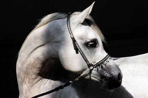 Horses Insight  (17)