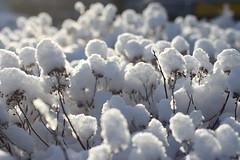 snowy wonder (jtunkelo) Tags: winter snow sunrise helsinki snowy lumi kulosaari wintery 2016