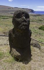 Tukuturi Moai at Rano Raraku (blueheronco) Tags: statues trail pacificocean moai easterisland quarry tuff rapanui isladepascua ranoraraku volcaniccrater tukuturi rapanuinationalpark sittingmoai