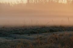 Sunrise in a frosty morning. (Kaurisko) Tags: morning field sunrise espoo letto laajalahti usva sumu otaniemi auringonnousu pakkasaamu heinikko