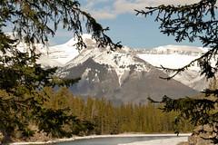 _1190516.jpg (Bucky-D) Tags: ca canada mountains rockies alberta banff bowriver bowfalls banffnationalpark canadianrockies fz1000