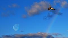 Un coup de chance? (Yasmine Hens) Tags: moon lune rainbow europa flickr belgium ngc sigma explore arcenciel namur hens yasmine iamflickr pijeon nikond5500 hensyasmine