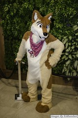 DSC_9699 (Exkhaniber) Tags: dog muskie huskie fursuit 2015 anthrocon canid
