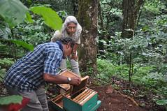 Beekeeping demonstration (mansi-shah) Tags: rainforest farming coorg madikeri beekeeping beekeeper forestecology mansishah rainforestretreat jenniferpierce savebees ceptsummerschool