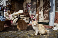 Madeira Cats (michaelbeyer_hh) Tags: cats madeira saovicente