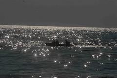 DSC_0176 (rajashekarhk) Tags: travel tourism reflections boating marinabeach chennai tamilnadu glittering mylapore hkr rajashekar seashine travalphotography