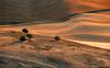 Sunset in Steptoe. (Louis Shum) Tags: light sunset brown tree green art nature field yellow landscape gold washington artistic panasonic visualart fz50 steptoe