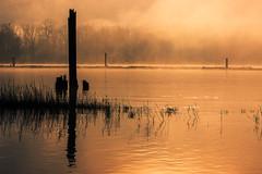 Mist Opportunity (Prestidigitizer) Tags: morning mist water fog river reeds golden pillar current fraserriver tiedown logboom pentaxda50135mm pentaxk3