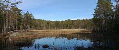 Woodland lake, tarn (hkkbs) Tags: lake woodland spring sweden sverige tarn westcoast vår våren västkusten bohus tjärn samsunggalaxynote4