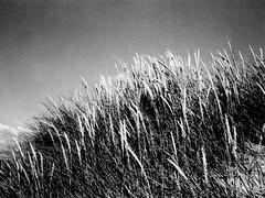 Wales 2015, Rollei 35TE, on Kodak TMax 100, in D76 (E.G. Riaza) Tags: bw beach nature wales analogic kodaktmax rollei35te