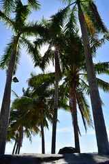 Sunrays (shineganancial) Tags: ocean light sea summer sun sunlight tree beach water rock bay sand ray philippines palm subic hdr sunray