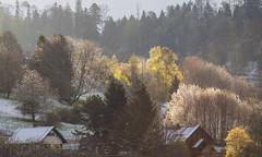 L'hiver rsiste (mrieffly) Tags: canoneos50d geishouse printempsvosges 100400issriel