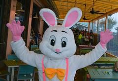LuLu Easter Bunny 2016-2