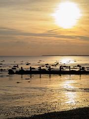 Bognor NovemberPB165912_05 (tony.rummery) Tags: sunset england seascape beach sussex unitedkingdom olympus gb southcoast groyne bognor englishchannel bognorregis breakwater mft microfourthirds epm1