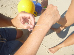 Bonefish larvae (MyFWC Research) Tags: fish conservation research bahamas larvae genetics abaco marinelife bonefish fwc albulavulpes lighttrap leptocephalus myfwc myfwccom bonefishandtarpontrust