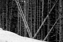 pas comme tout le monde (glookoom) Tags: blackandwhite bw snow black france nature monochrome montagne grenoble landscape noir noiretblanc bokeh contraste neige paysage foret blanc bois chamrousse rhnealpes