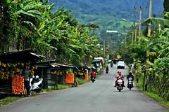taman safari (NamiQuenbyBusy) Tags: indonesia bogor puncak tamansafari