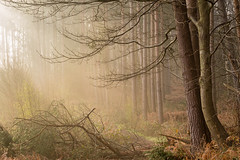 Twisted (Stuart_East) Tags: wood morning nature misty pine forest downs sussex outdoor south common heathland pulborough wiggonholt