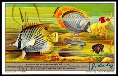 Liebig Tradecard - S1339 Exotic Aquarium Fish (cigcardpix) Tags: fish vintage advertising ephemera liebig tradecards