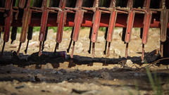 Scaffolding Centipede (Theen ...) Tags: shadow red sun green feet cup coffee grass metal paper lumix site construction scaffolding stack dirt adelaide centipede crushed theen