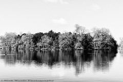 OstPk_DSC5535 (Nick Woods Photography) Tags: trees blackandwhite bw lake water landscape mono blackwhite spring nt nationaltrust middlesex osterley freshwater osterleypark lakescene waterscape waterreflections waterscene bwimage treereflections nationaltrustosterleypark