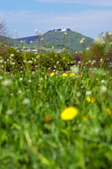 Leopoldsberg (IMG4616) (Bildredaktion Wien) Tags: vienna wien austria sterreich spring natur environment gras frhling umwelt sonnenschein donauinsel leopoldsberg lwenzahn