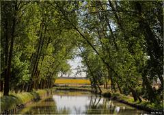 Canal de Castilla (Valladolid) (Jose Manuel Cano) Tags: espaa tree water river landscape arbol spain agua paisaje valladolid castilla canaldecastilla nikond5100