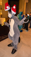 _DSC7714 (Acrufox) Tags: midwest furfest 2015 furry convention december hyatt regency ohare rosemont chicago illinois acrufox fursuit fursuiting mff2015