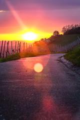 Sunset vineyard Metzingen (puhmii) Tags: sunset sun mountain germany outside deutschland outdoor dusk sony 7 ii alpha baden a7 metzingen wrttemberg a7ii