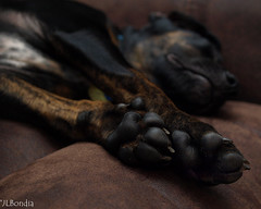 Puppy Paws (JLBondia) Tags: sleeping dog feet puppy adorable paws wimpy ratterriermix