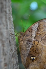 The tree-hugger (Nerissa Smit) Tags: macro nature amsterdam animals closeup zoo wings insects artis butterflys