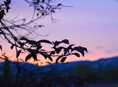Sky 20140720 (caligula1995) Tags: sunset plumtree 2014