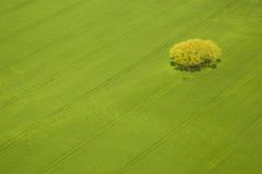 20160429_F0001: Green grass and yellow tree (wfxue) Tags: plant abstract tree green field lines yellow plane landscape pattern aerial passengerplane passengerjet windowsit