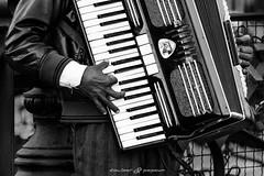 Accordion (dalibor.papcun) Tags: street people blackandwhite bw music musicians contrast slovensko slovakia gipsy kosice musicant streetjob mlynska