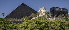 The Luxor (Preston Ashton) Tags: vegas blue sky usa tree sunshine america hotel us pyramid lasvegas head egypt sunny casino palm resort believe egyptian northamerica sphynx luxor crissangel prestonashton