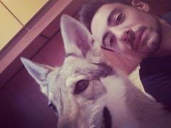 #auguri di #buon #natale #merrychristmas #merry #christmas #noel #happy #felice #feste #holiday #vacanze #lupocecoslovacco #czechoslovakianwolfdog #canelupocecoslovacco #wolfdog #cane #cani #dog #dogs #wolf #lupo #family #famiglia #sempre #insieme #togeth (DanielOssino_EducatoreCinofilo) Tags: christmas family dog holiday dogs cane square happy wolf famiglia noel together squareformat merry natale sempre felice insieme vacanze auguri lupo cani czechoslovakian buon feste amaro wolfdog canelupo cecoslovacco canelupocecoslovacco lupocecoslovacco czechoslovakianwolfdog iphoneography instagramapp uploaded:by=instagram czechoslovakianwolf merrychristmasbuonnatale