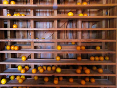 Drying oranges (Maine Islander) Tags: oranges spanishpoint ospreyfl