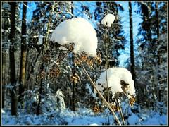 Hubchen (almresi1) Tags: wood schnee winter snow wald winterwald welzheim schwbischerwald