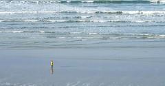 121104 Trpasss (Balades & Randos) Tags: jaune promenade vagues plage espace solitaire cir