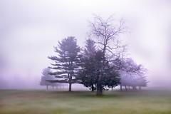 Sitting pretty..... (Melanie Bradley) Tags: trees light mist nature fog forest landscape connecticut horizon foggy newengland fairfield