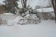 2016 Blizzard Jonas 16015517 (thw05) Tags: trees winter people usa snow streets tourism ice nature public water january maryland places scene historic 23 annapolis blizzard eastport drift 2016 traveldestinations famousplace thwphotoscom thwilliamsphotography thomashwilliams