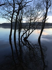 On Yon Bonnie Banks of Lock Lomond (clive_metcalfe) Tags: winter reflection scotland lochlomond